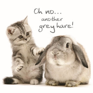Sq Kaart Grey Hares
