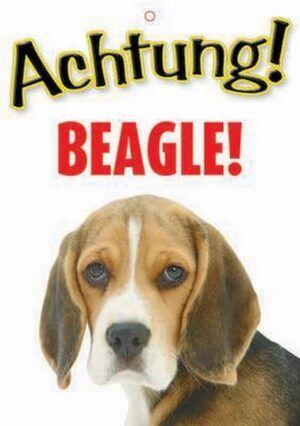Warnzeichen Beagle!