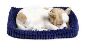 Perfect Petzzz Chihuahua (Tan & White)